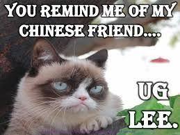 grumpy cat quotes frozen. Perfect Quotes Grumpy Cat Quotes Frozen  Google Search For Grumpy Cat Quotes Frozen Pinterest
