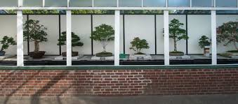 bonsai gardens. bonsai display gardens