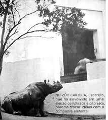 Resultado de imagem para Cacareco