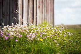 Znalezione obrazy dla zapytania łąki