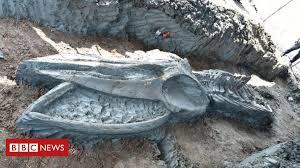 Thailand: Rare whale <b>skeleton</b> discovered - BBC News