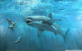 great white shark painting. Interesting Great Wide  With Great White Shark Painting T