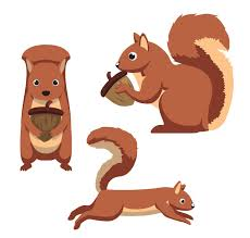 Squirrel Species Chart Common Squirrels Species Living In The Us Pest Wiki