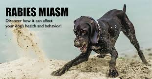 rabies miasm the rabies vaccine side effect that can harm your  rabies vaccine side effects