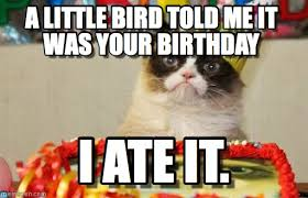 grumpy cat birthday bird.  Cat Grumpy Cat Birthday  A Little Bird Told Me It Was Your Birthday I Ate With