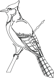 Printable Bird Coloring Pages Click To See Printable Version Of