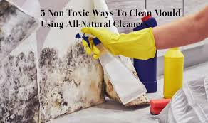 5 non toxic ways to clean mould using