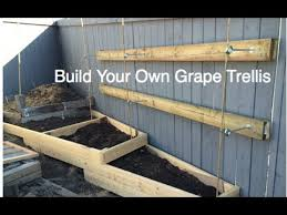 How-to build a Simple Grape Trellis on a residential fence DIY in the  Alberta Urban Garden - YouTube