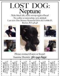 Lost Pet Flyer Maker Missing Dog Burien Wa LOST FOUND PETS WA STATE 35