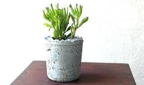 diy cement planters cement plant pots