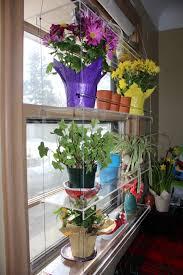 indoor window garden. img_4825 indoor window garden s