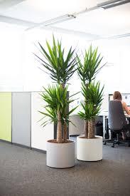 interior office plants. decorative plants for office simple flower sale artificial bonsai interior