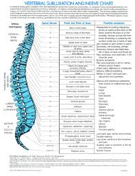 Vertebral Subluxation Chart The Vertebral Subluxation And Nerve Chart
