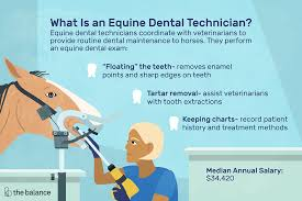 Veterinarian Technician Salary Equine Dental Technician Job Description Salary Skills More