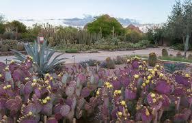 free admission to the desert botanical garden phoenix 6 13 17