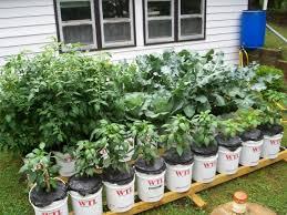 garden bucket. Shining Inspiration Bucket Gardening 13 Best Images On Pinterest Gardens Flowers Garden B