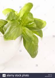 Kitchen Herbs Garden Peel Basil Ceramics Peel Plant Knows Foods Herbs Salvation Plants