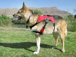 Ruffwear Harness Size Chart Ruffwear Harness Help Three Legged Dogs Support Mobility
