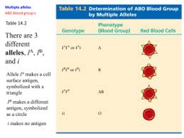 How To Make A Pedigree Chart For Blood Type Best Picture
