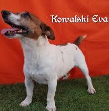 KOWALSKI EVA – Doggolden