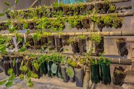 organic hanging baskets vegetable garden made of plastic bottles inside a home stock photo 41097356