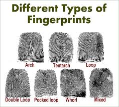 Image result for fingerprints