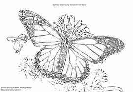 Small Picture Page Free Printable Kamehameha Pages Kamehameha Butterfly Coloring