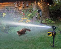 cat repellent for garden. Cat Repellent Comparison Chart For Garden E