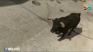 разъяренный бык забодал участника ежегодного бега с быками в испании