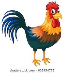 chicken clipart.  Chicken Rooster Standing On White Background Illustration Intended Chicken Clipart Shutterstock