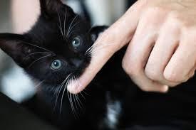 Картинки по запросу хозяин гладит котенка