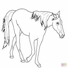 Kleurplaten Van Paarden Gratis