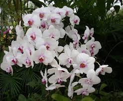 Una delle tantissime incredibili immagini gratuite su pexels. Fiore Giallo Simile All Orchidea Orchidea Significato In Amore E Amicizia Sapone A Forma Di Fiore Fragranza Limone Deporte Registrado
