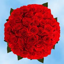 fresh red roses 50 stems
