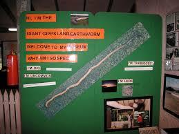 hi, i'm the giant gippsland earthworm ...