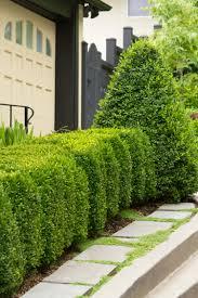 Green Mountain Boxwood Monrovia Green Mountain Boxwood
