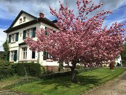 Apartment Ferienwohnung Im Kelterhaus Wiltingen Germany
