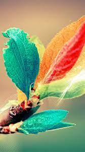 Beautiful Colorful Bud Leaf Branch Silk ...