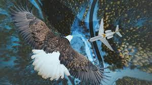 eagle, airplane, sky, aerial view ...