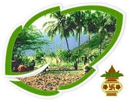 pongal harvest festival harvest festival of south tamil pongal the harvest festival