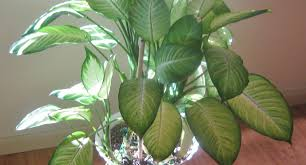 plant : Awesome Common Indoor Plants Top 5 Indoor Plants And How ...
