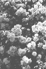 black and white flowers tumblr photography. Simple And Moonshine Photography Black And White  And Black White Flowers Tumblr E