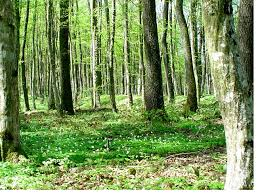 essay on the n forest forest