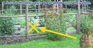 how do i keep rabbits out of my garden. Simple Rabbits Keep Rabbits Out Of Garden Moth Balls Homemade Repellents For Voles   Throughout How Do I Keep Rabbits Out Of My Garden O