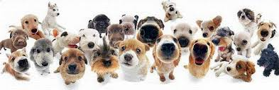 lots of dogs together.  Lots I Get A Taste Of Everything That We Do At Happy Dogs In Lots Of Dogs Together