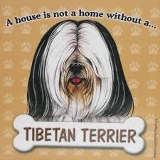 tibetan terrier magnet house is not a home wht blk