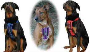 Chest Plate Harness Solid Colors W Seatbelt Restraint By Ezydog