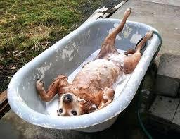 image of dog grooming bath tubs bathtub hose for washing tub sink dogs baths by bathtub hose for washing