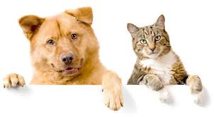 pet insurance get a quote