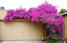 The Ultimate Guide To Living Green Walls  AmbiusWall Climbing Plants India